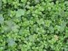 Pflanzen-Verschiedene-Foto_Textur_B_02121