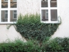 Pflanzen-Verschiedene-Foto_Textur_B_10120