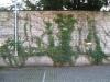 Pflanzen-Verschiedene-Foto_Textur_B_10330
