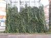 Pflanzen-Verschiedene-Foto_Textur_B_10570