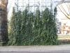 Pflanzen-Verschiedene-Foto_Textur_B_10590