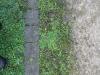 Pflanzen-Verschiedene-Foto_Textur_B_12230