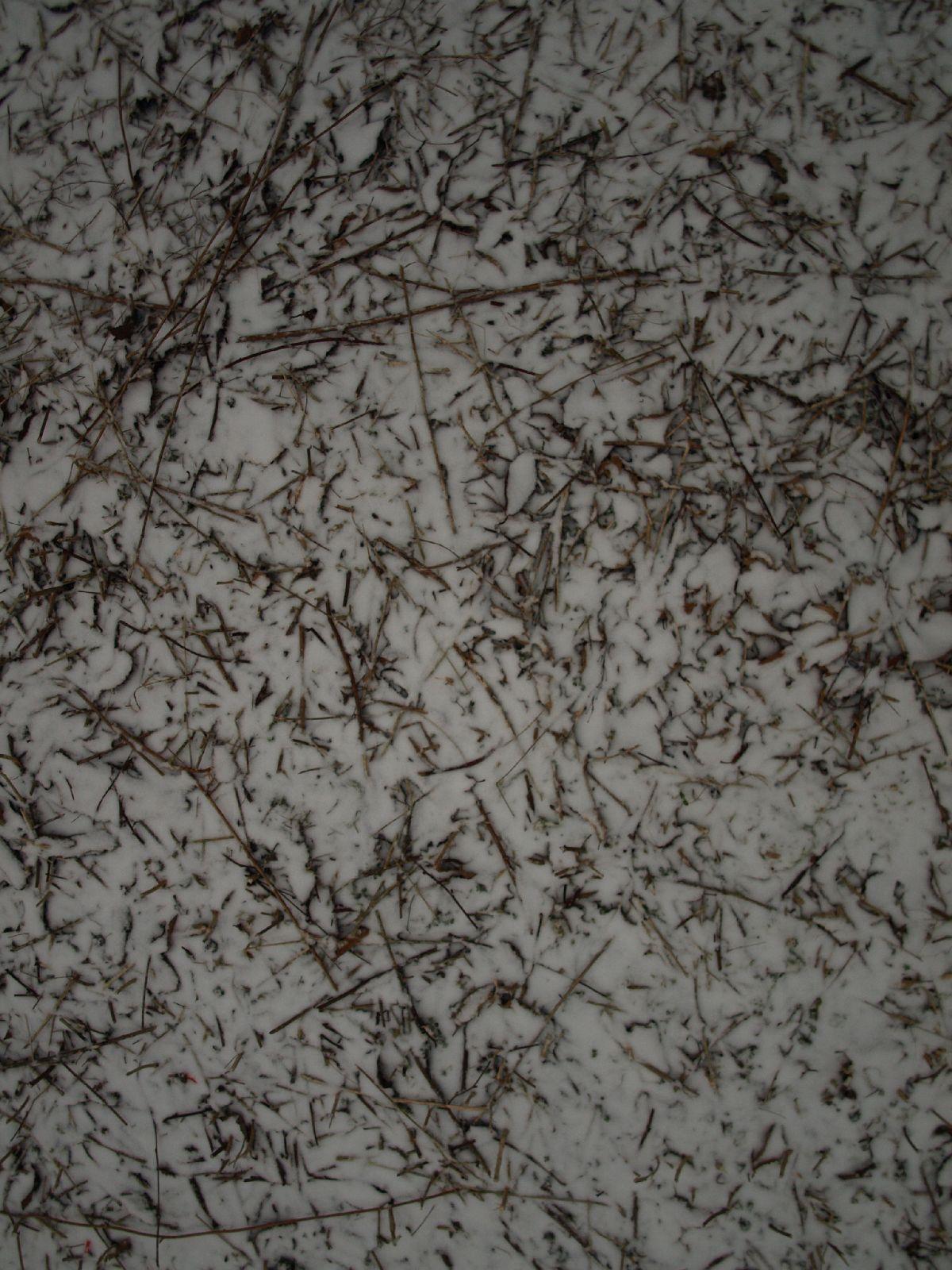 Schnee-Eis_Textur_A_P1028735