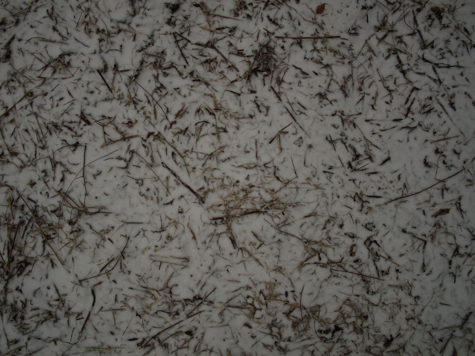 Schnee-Eis_Textur_A_P1028736