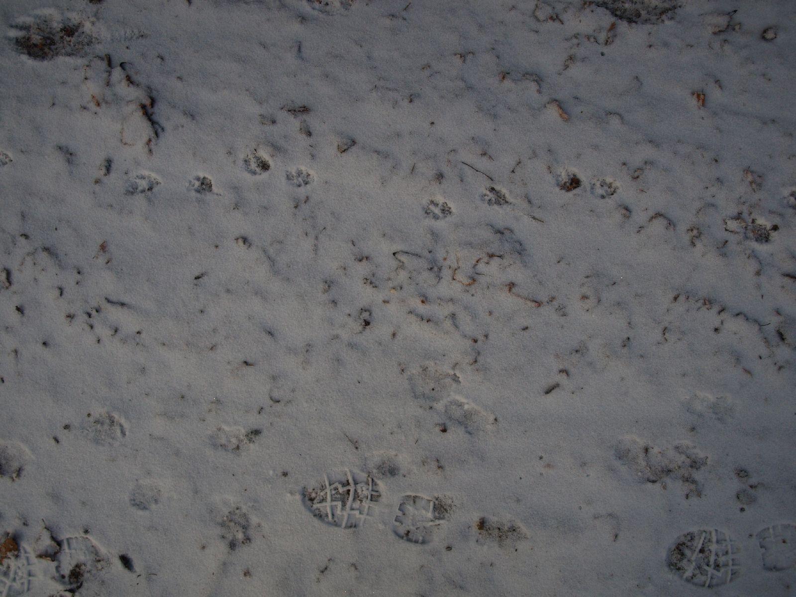 Schnee-Eis_Textur_A_P1038759