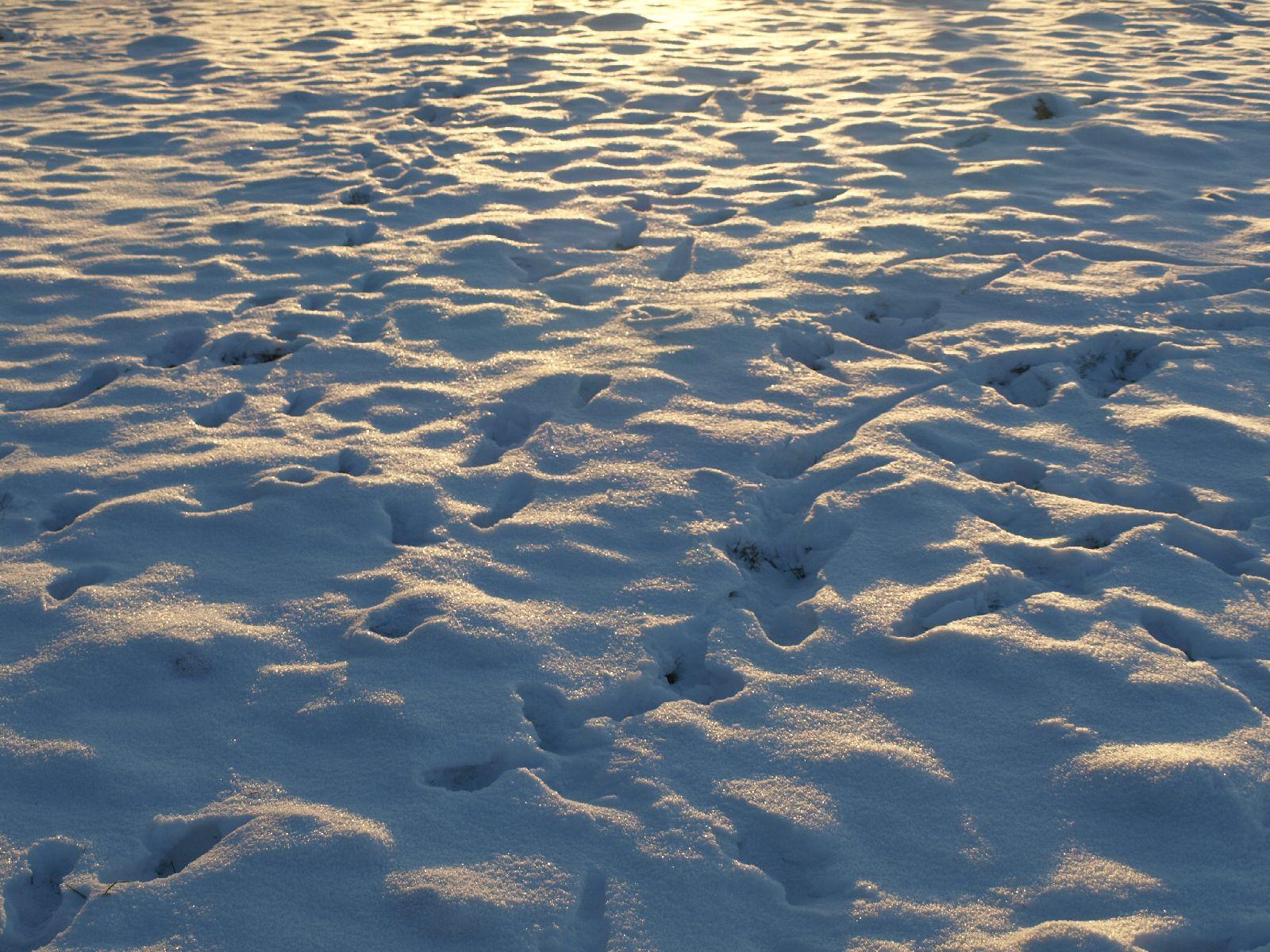 Schnee-Eis_Textur_A_P1109045