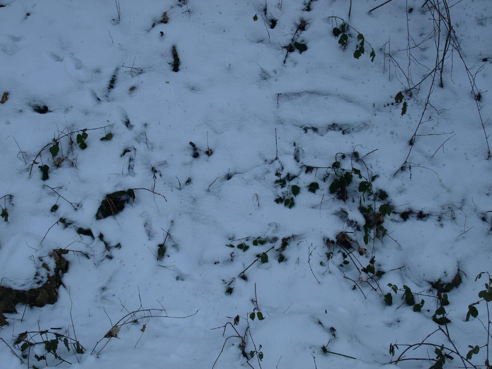 Schnee-Eis_Textur_A_P1119206