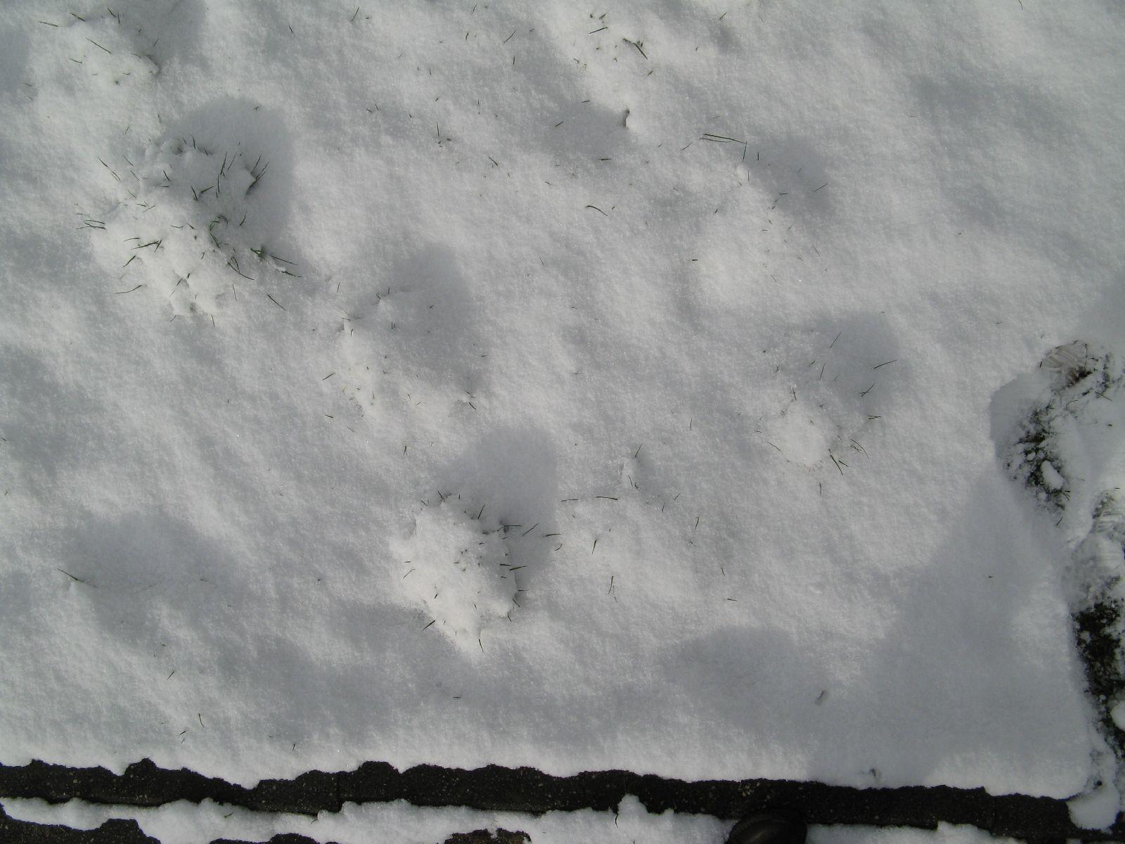 Schnee-Eis_Textur_B_5840