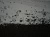 Schnee-Eis_Textur_A_P1028724