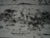 Schnee-Eis_Textur_A_P1028729