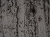 Schnee-Eis_Textur_A_P1028752