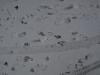 Schnee-Eis_Textur_A_P1048785