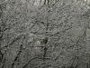 Schnee-Eis_Textur_A_PB226721