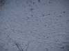 Schnee-Eis_Textur_A_PC211533