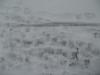 Schnee-Eis_Textur_B_5895