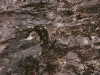 Stein-Felsen_Textur_A__MG_2609