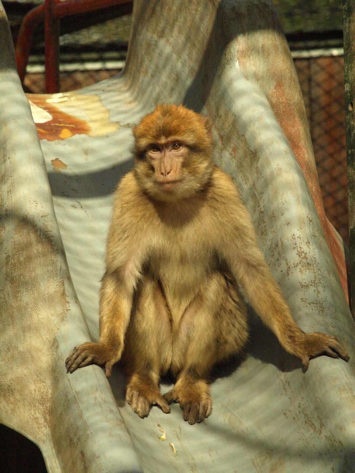 Kostenlose Tier Textur Foto Sammlung