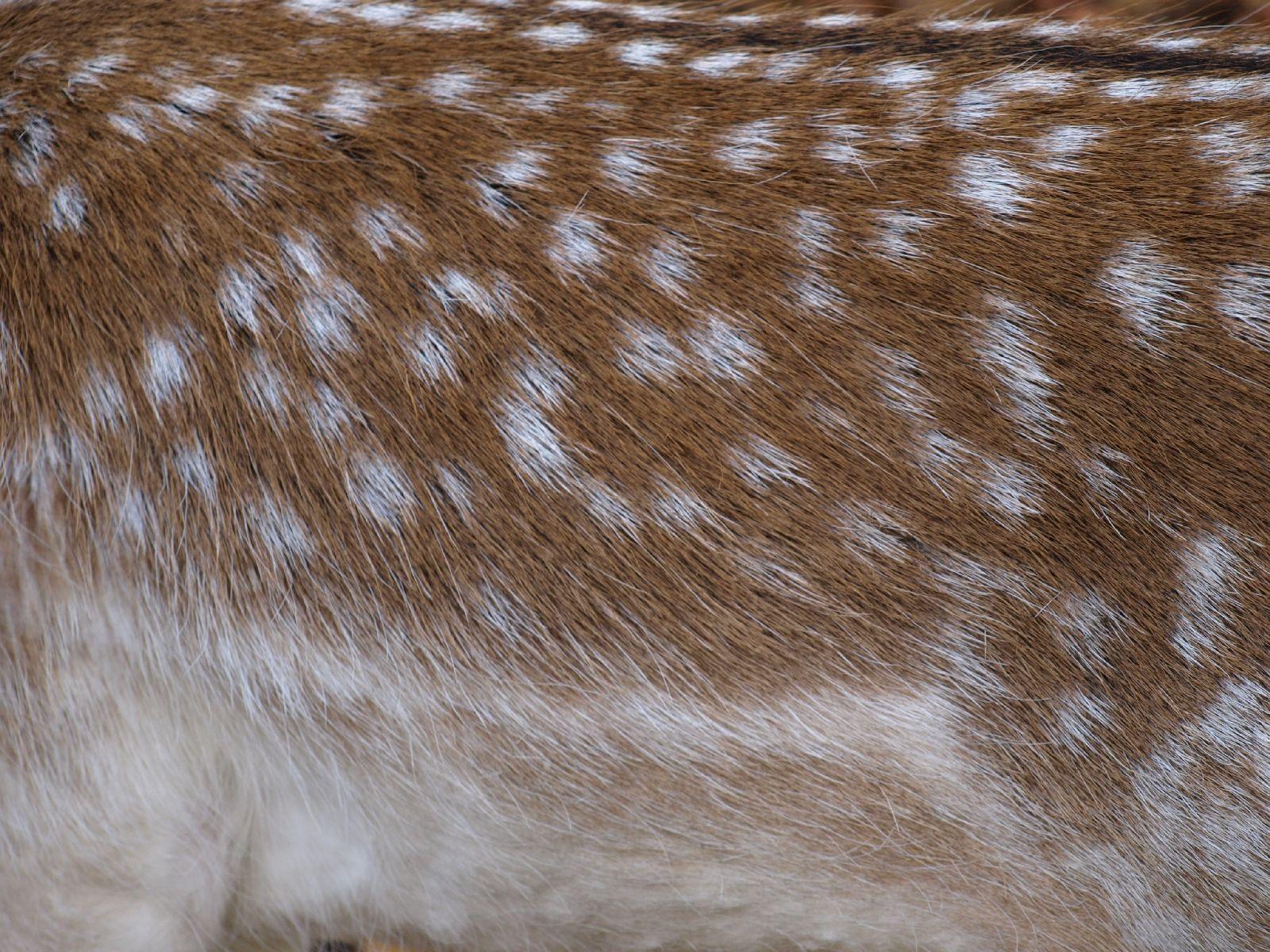 Tiere-Foto_Textur_A_PA250507