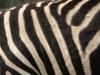 Tiere-Foto_Textur_A_P9215469