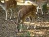 Tiere-Foto_Textur_A_P9279903