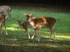 Tiere-Foto_Textur_A_P9279909