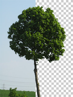 Baum-freistellen-Photoshop-Tutorial_01
