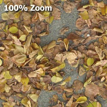 Kostenloser Download Textur Laub Boden im Herbst
