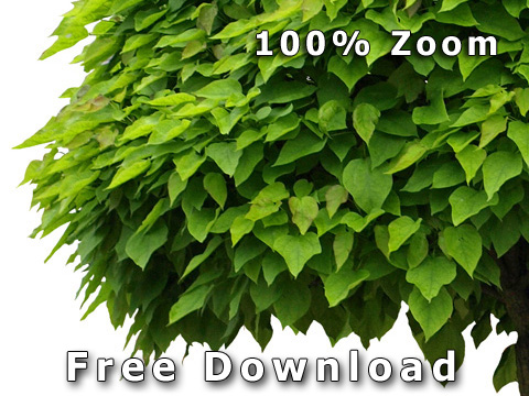 Free_Cut_Out_Tree_Zoom