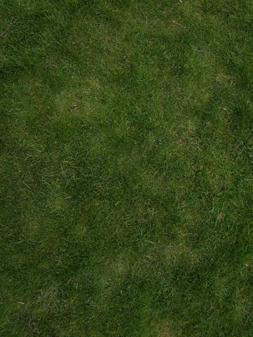 Von diesem Foto wollen wir eine kachelbare Rasentextur erstellen
