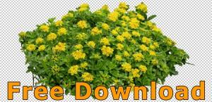 Freigestellte_Blumen_PNG_Kostenloser_Download_02