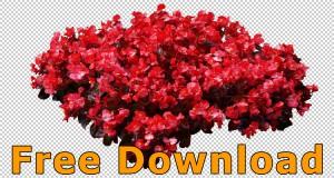 Freigestellte_Blumen_PNG_Kostenloser_Download_03