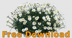 Freigestellte_Blumen_PNG_Kostenloser_Download_04