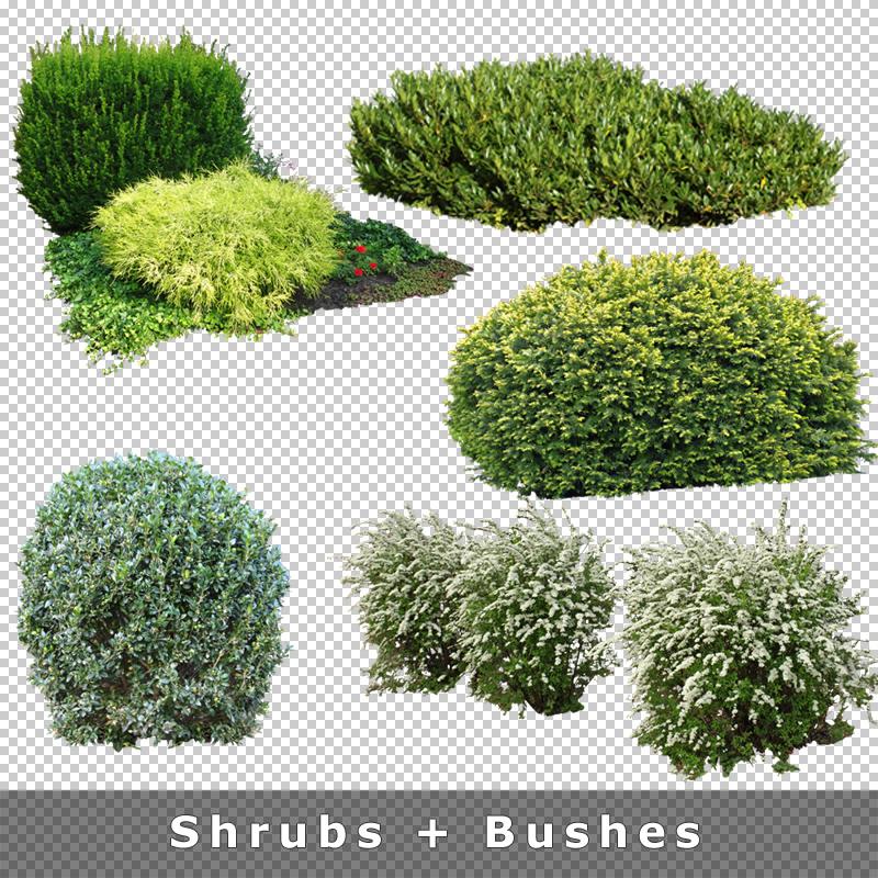 cutout plants v03 pflanzen f r architektur renderings. Black Bedroom Furniture Sets. Home Design Ideas