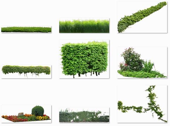 Freigestellte-Pflanzen-Kostenloser-Download_580