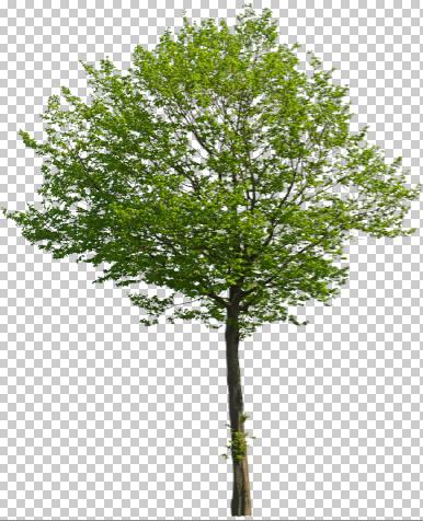 29_Freigestellter-Baum-Photoshop-Schatten-hinzufuegen