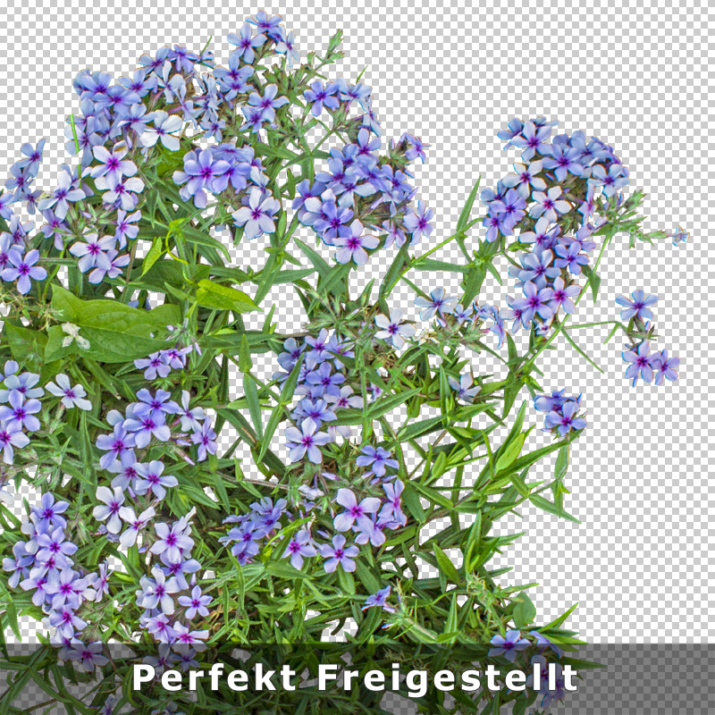 4-qualitaet-aufloesung-png-blumen-download