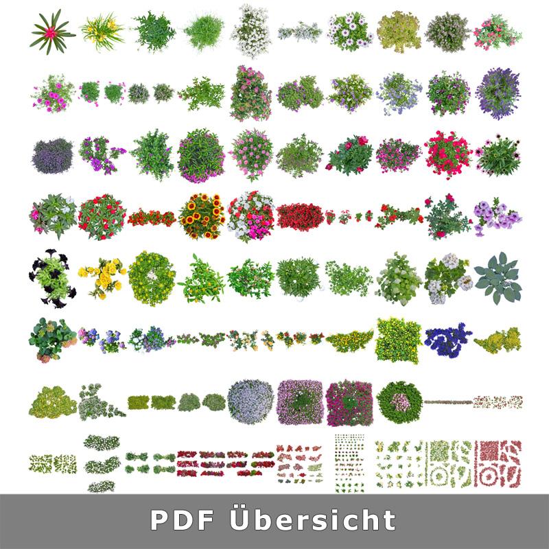 Top View Flowers - Freigestellte Blumen als Draufsicht von ...