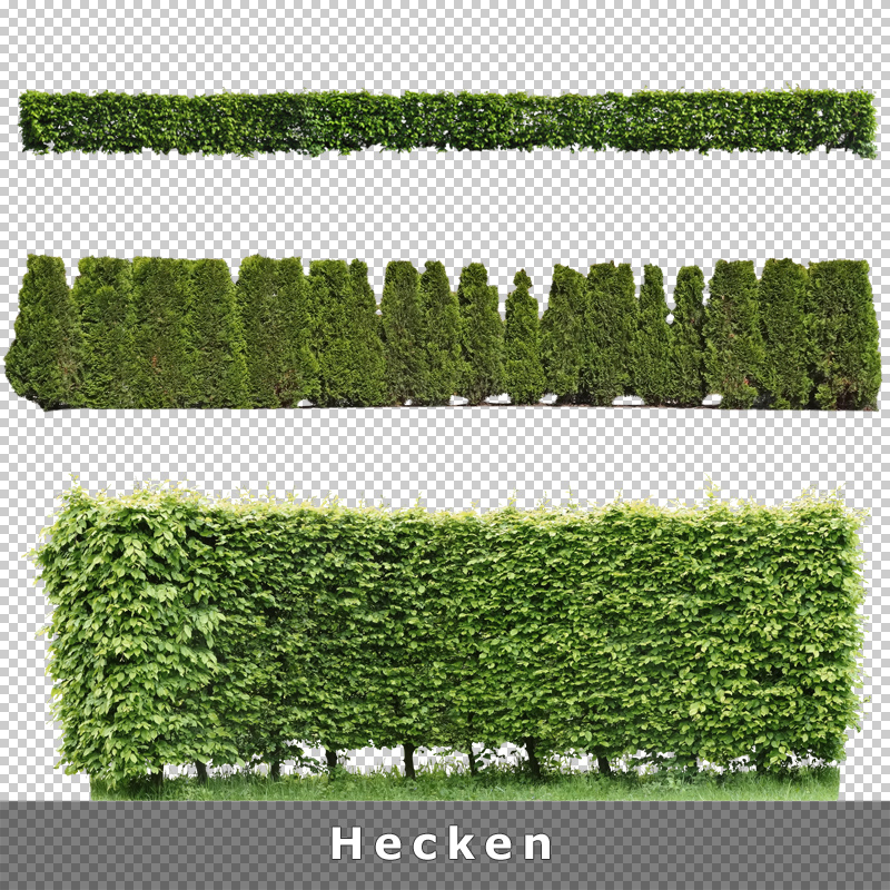 cutout plants v01 freigestellte pflanzen zur architektur. Black Bedroom Furniture Sets. Home Design Ideas