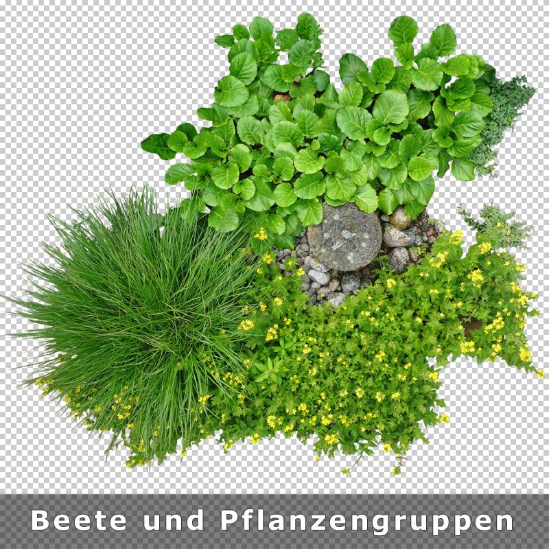 Top View Plants V1 Freigestellte Pflanzen Als Grundriss Aufsicht