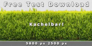 150-300_Kostenlos-Test-Download-Kachelbare-Hecken-Textur-V3.jpg