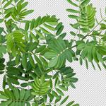 150-Download-Hohe-Aufloesung-Freigestellte-Pflanzen