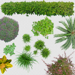 150-PNG-Pflanzen-Photoshop-Bibliothek