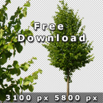 150_Freigestellt-Baeume_Architektur_V02_free.jpg