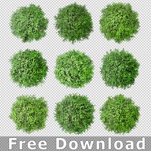 Baum-Draufsicht-Free-Kostenlos-Download
