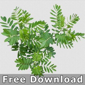 300-Download-Gratis-Freigestellte-Pflanze-Aufsicht-von-oben
