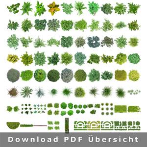Download-freigestellte-pflanzen-sammlung