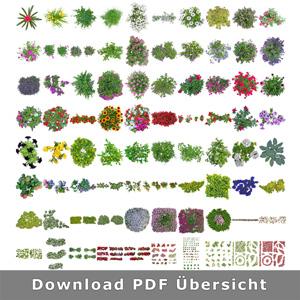 aufsicht-freigestellte-blumen-pflanzen-architektur-staffage