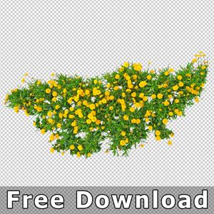 300-kostenloser-download-freigestellte-blumen-architektur