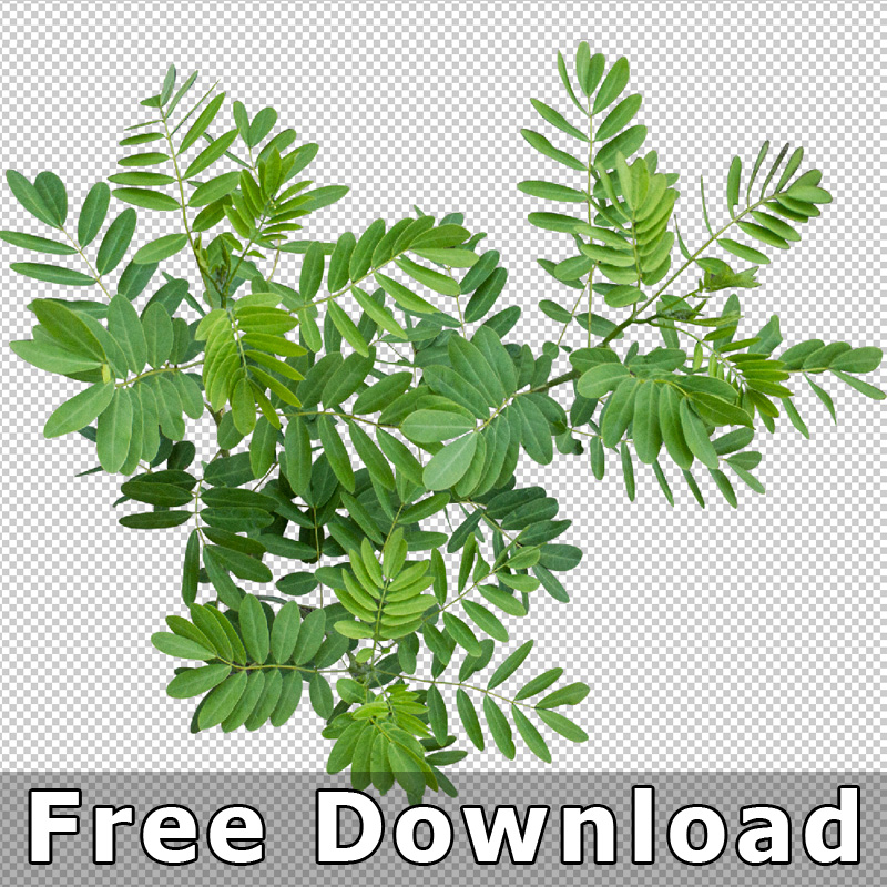 Top View Plants V2 Freigestellte Pflanzen 2d Grundriss Architektur
